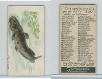E32 Philadelphia Caramel, Fish, 1907, Catfish