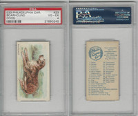 E33 Philadelphia Caramel, Dogs, 1911, Boarhound, PSA 4 VGEX