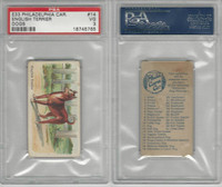 E33 Philadelphia Caramel, Dogs, 1911, English Terrier , PSA 3 VG