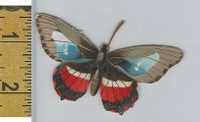 Victorian Card, 1890's, Animals Diecut, Butterfly (A1)