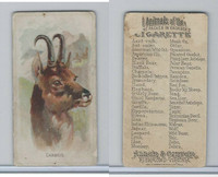 N25 Allen & Ginter, Wild Animals, 1888, Chamois (B)