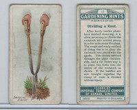 C15 Imperial Tobacco, Gardening Hints, 1923, #10 Dividing A Root