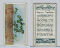 C15 Imperial Tobacco, Gardening Hints, 1923, #13 Strawberry Propagation