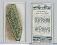C15 Imperial Tobacco, Gardening Hints, 1923, #17 Protecting a Strawberry Bed