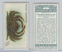 W62-187 Wills, Wonders of the Sea, 1928, #21 Spiny Spider Crab