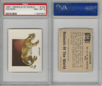 1951 Topps, Animals of the World, #154 Cougar, PSA 8 NMMT