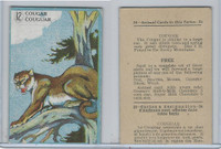 V2 Cowan, Animal Cards, 1920's, (Trimmed) #12 Cougar