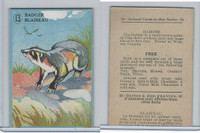 V2 Cowan, Animal Cards, 1920's, (Trimmed) #13 Badger