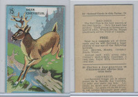 V2 Cowan, Animal Cards, 1920's, (Trimmed) #15 Deer