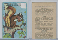 V2 Cowan, Animal Cards, 1920's, (Trimmed) #18 Squirrel
