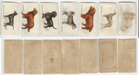 1890 Goodwin Tobacco Dogs, N163, Lot of 7 Skinned Cards