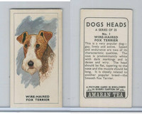 A0-0 Amaran Tea, Dogs Heads, 1965, #1 Wire Haired Fox Terrier