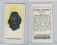 A0-0 Amaran Tea, Dogs Heads, 1965, #20 Miniature Poodle
