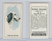 A0-0 Amaran Tea, Dogs Heads, 1965, #24 English Setter