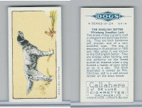 G12-80 Gallaher Tobacco, Dogs, 1934, #14 English Setter