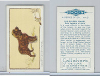 G12-80 Gallaher Tobacco, Dogs, 1934, #21 Golden Spaniel