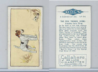 G12-80 Gallaher Tobacco, Dogs, 1934, #24 Fox Terrier