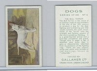 G12-81 Gallaher Tobacco, Dogs, 1936, #4 Bull Terrier