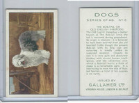 G12-81 Gallaher Tobacco, Dogs, 1936, #6 Bob-Tail or Old English Sheepdog