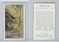 G12-81 Gallaher Tobacco, Dogs, 1936, #12 Lakeland Terrier