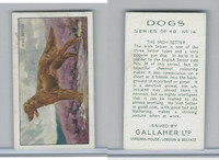 G12-81 Gallaher Tobacco, Dogs, 1936, #14 Irish Setter