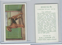 G12-81 Gallaher Tobacco, Dogs, 1936, #19 Airdale