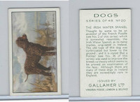 G12-81 Gallaher Tobacco, Dogs, 1936, #20 Irish Water Spaniel