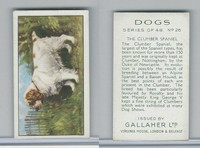 G12-81 Gallaher Tobacco, Dogs, 1936, #26 Clumber Spaniel