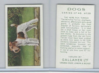 G12-81 Gallaher Tobacco, Dogs, 1936, #28 Wire Fox Terrier