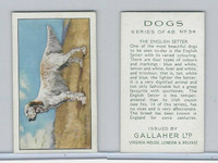 G12-81 Gallaher Tobacco, Dogs, 1936, #34 English Setter