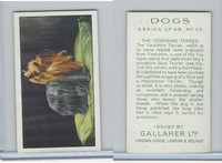 G12-81 Gallaher Tobacco, Dogs, 1936, #43 Yorkshire Terrier