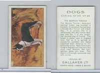 G12-81 Gallaher Tobacco, Dogs, 1936, #45 Boston Terrier