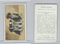 G12-81 Gallaher Tobacco, Dogs, 1936, #46 Staffordshire Bull Terrier