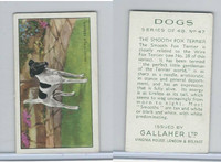 G12-81 Gallaher Tobacco, Dogs, 1936, #47 Smooth Fox Terrier