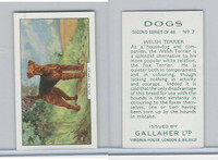 G12-81b Gallaher Tobacco, Dogs 2nd Series, 1938, #7 Welsh Terrier