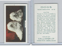 G12-81b Gallaher Tobacco, Dogs 2nd Series, 1938, #8 Maltese