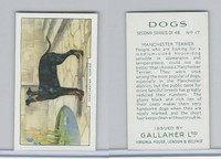 G12-81b Gallaher Tobacco, Dogs 2nd Series, 1938, #17 Manchester Terrier