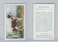 G12-81b Gallaher Tobacco, Dogs 2nd Series, 1938, #27 Welsh Springer Spaniel