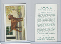 G12-81b Gallaher Tobacco, Dogs 2nd Series, 1938, #31 Border Terrier
