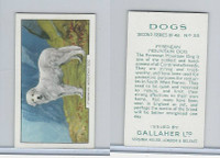 G12-81b Gallaher Tobacco, Dogs 2nd Series, 1938, #35 Pyrenean Mountain