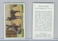 G12-81b Gallaher Tobacco, Dogs 2nd Series, 1938, #37 African Hairless Terrier