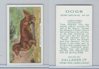 G12-81b Gallaher Tobacco, Dogs 2nd Series, 1938, #39 Long-Haired Dachshund