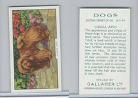 G12-81b Gallaher Tobacco, Dogs 2nd Series, 1938, #41 Lhassa Apso