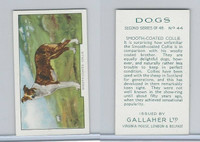 G12-81b Gallaher Tobacco, Dogs 2nd Series, 1938, #44 Smooth-Coated Collie