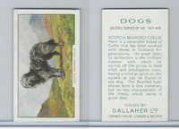 G12-81b Gallaher Tobacco, Dogs 2nd Series, 1938, #48 Scotch Bearded Collie