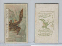 B116-151 BAT Eagle Cigarettes, Animals & Birds, 1912, #2 Eagle
