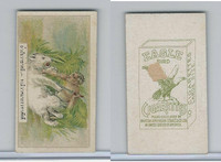 B116-151 BAT Eagle Cigarettes, Animals & Birds, 1912, #10 Bear