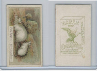 B116-151 BAT Eagle Cigarettes, Animals & Birds, 1912, #12 Rats