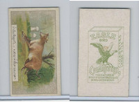 B116-151 BAT Eagle Cigarettes, Animals & Birds, 1912, #13 Cow
