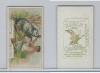 B116-151 BAT Eagle Cigarettes, Animals & Birds, 1912, #14 Boar, Pig